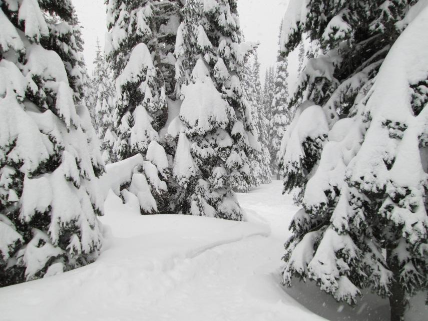 Classic Cascade tree skiing